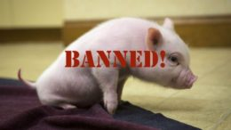 Muslim Rights: Pork products now BANNED from public schools. Students face fines for bringing pork from home.